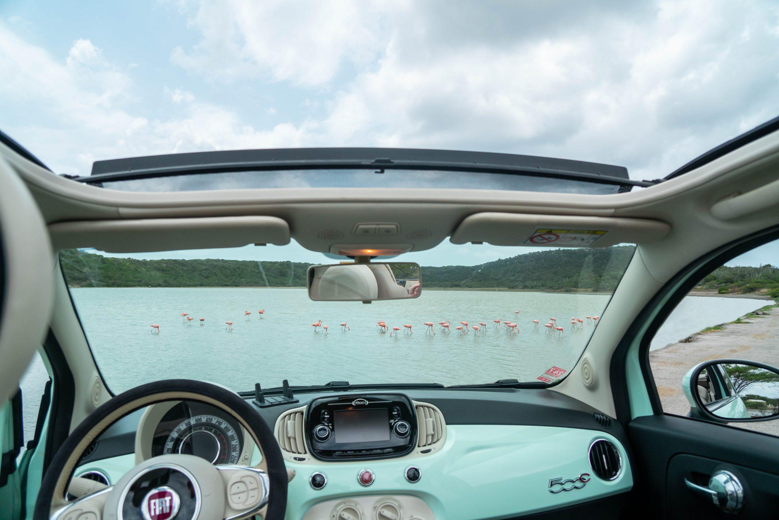 LivCuracao car at the flamingo's